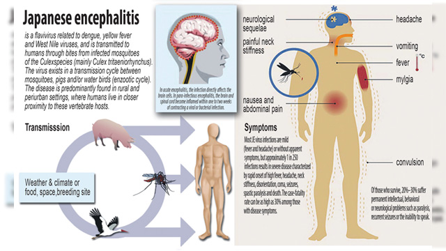 Stiff Neck One Symptoms of Japanese Encephalitis Disease