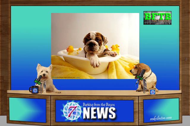 BFTB NETWoof News reports on a hero dog and a tub rescue