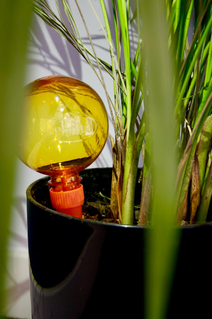 A yellow Plantpal watering globe sits in a plant pot containing a fern