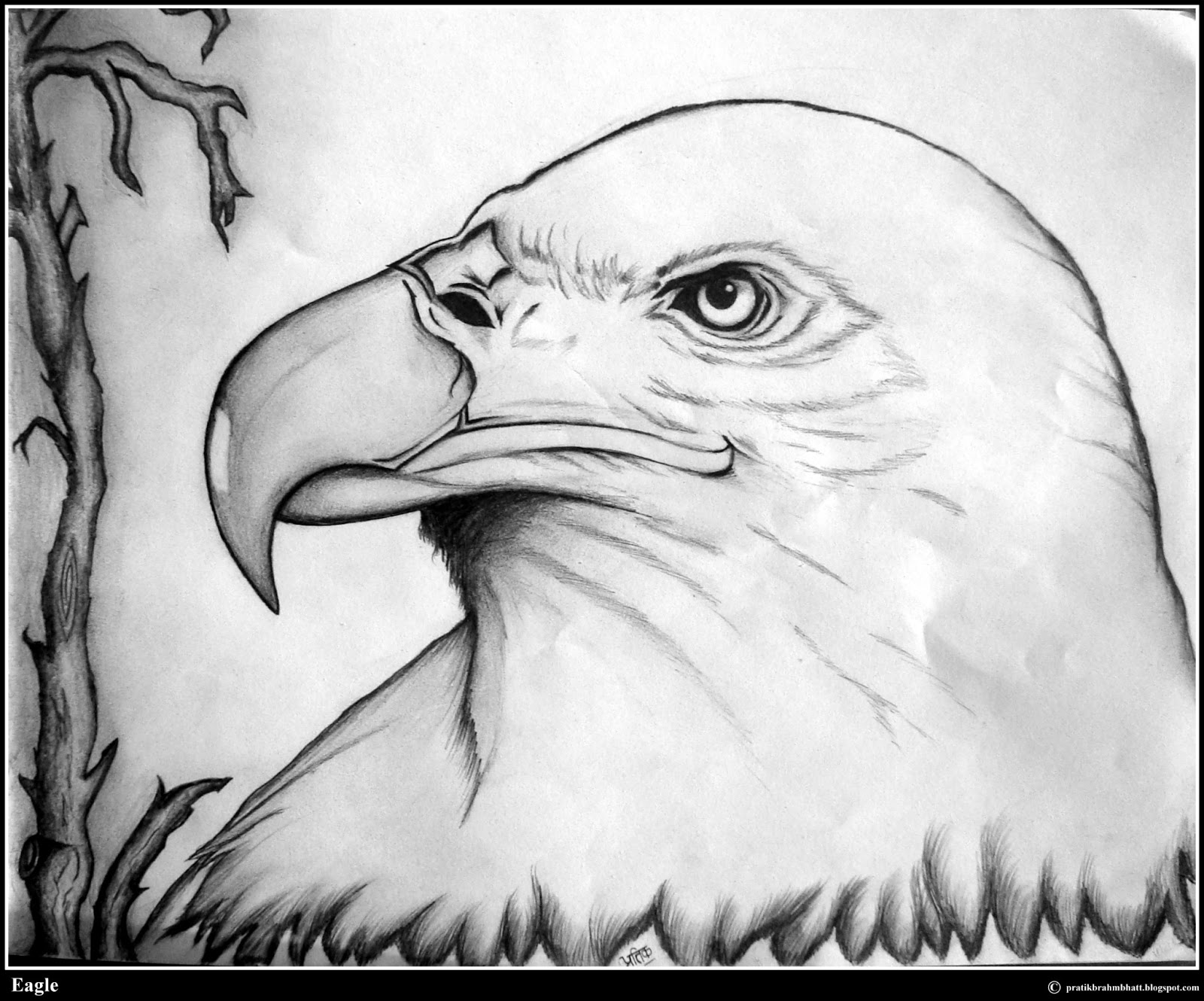Youve arrived at pratik brahmbhatts eagle pencil drawing page i hope you like it enjoy click on the drawing for the full size view