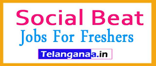Social Beat Recruitment 2017 Jobs For Freshers Apply