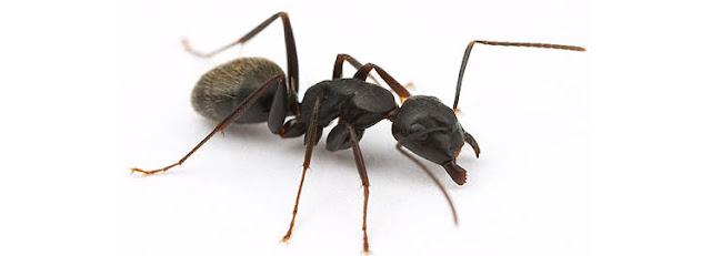 El ingenio de una hormiga | Capacitaccion Chile