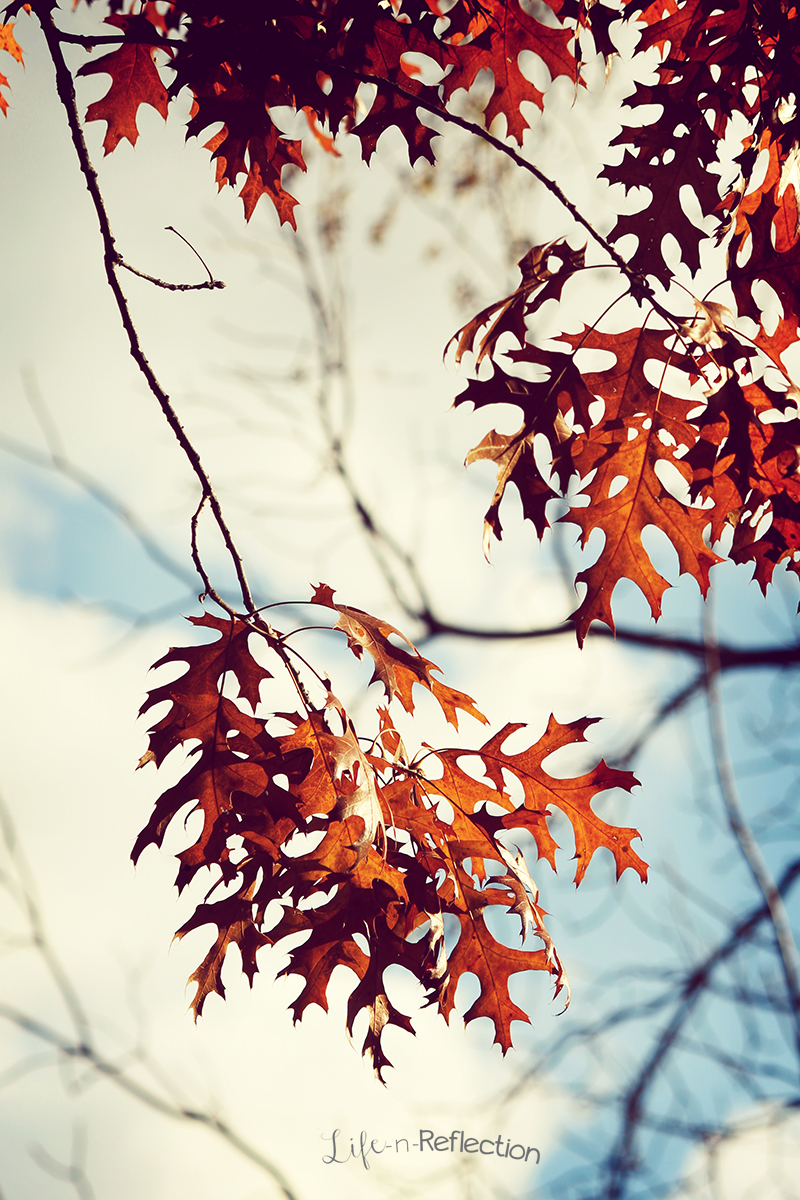Autumn Leaves by lifenreflection