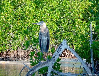 Oiseau de la réserve naturelle de Rio Lagartos au Mexique