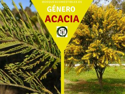 Lista de arboles del Género Acacia comúnmente llamadas Mimosas
