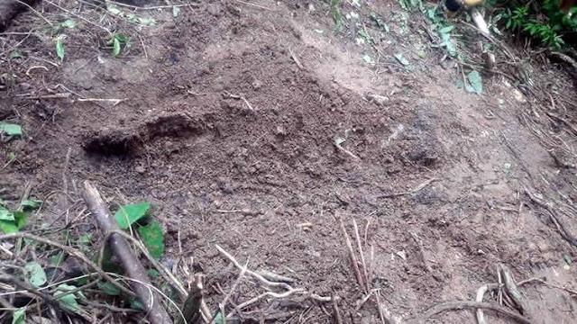 Resultado de imagem para Mãe é presa suspeita de enterrar viva a filha recém-nascida no litoral do Ceará