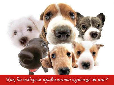 как да изберем правилното кученце