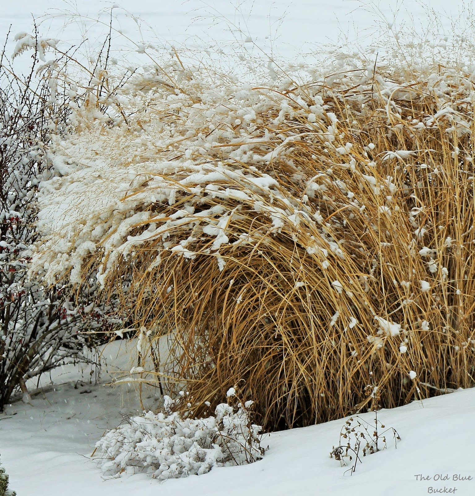 The Old Blue Bucket: Saying Goodbye To Winter In The Garden