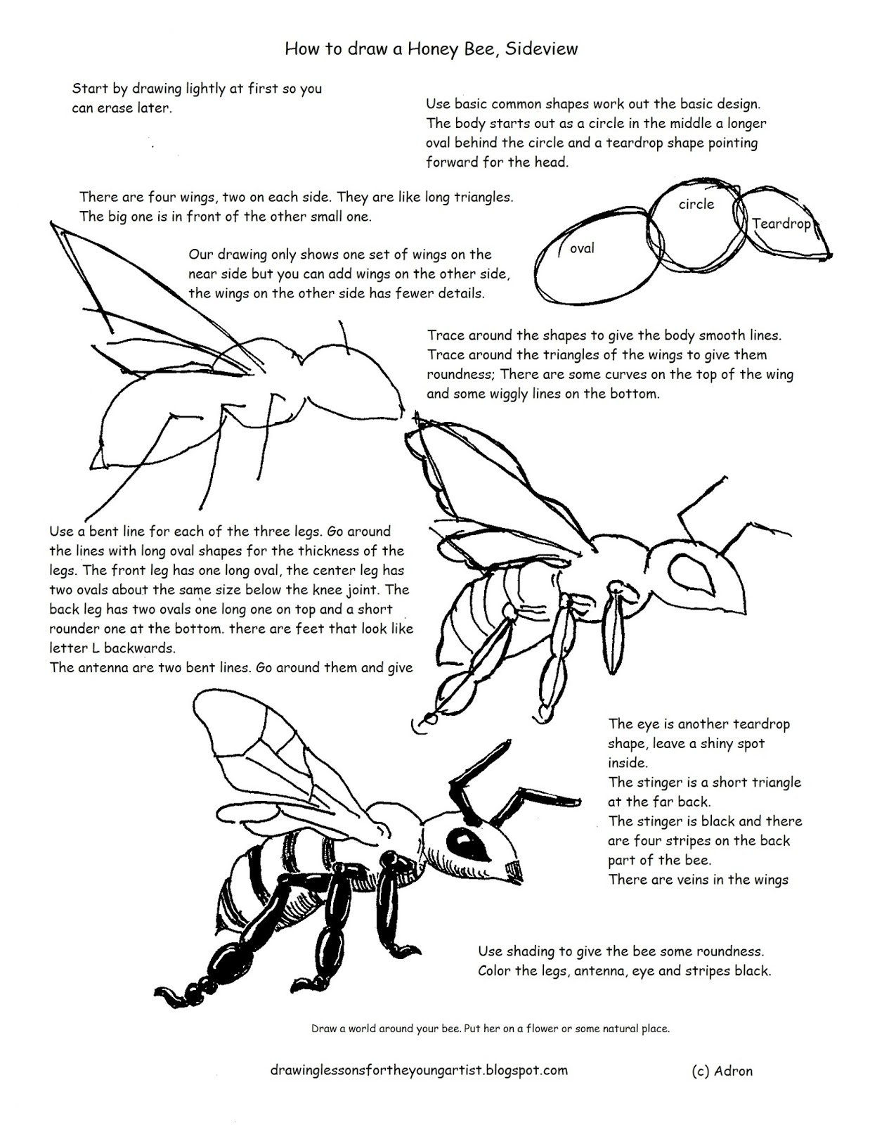 worksheet Drawing Worksheets how to draw worksheets for the young artist a honey honeybee printable worksheet