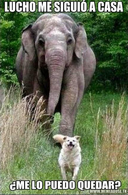 Imagenes chistosas de animales con frases chistosas