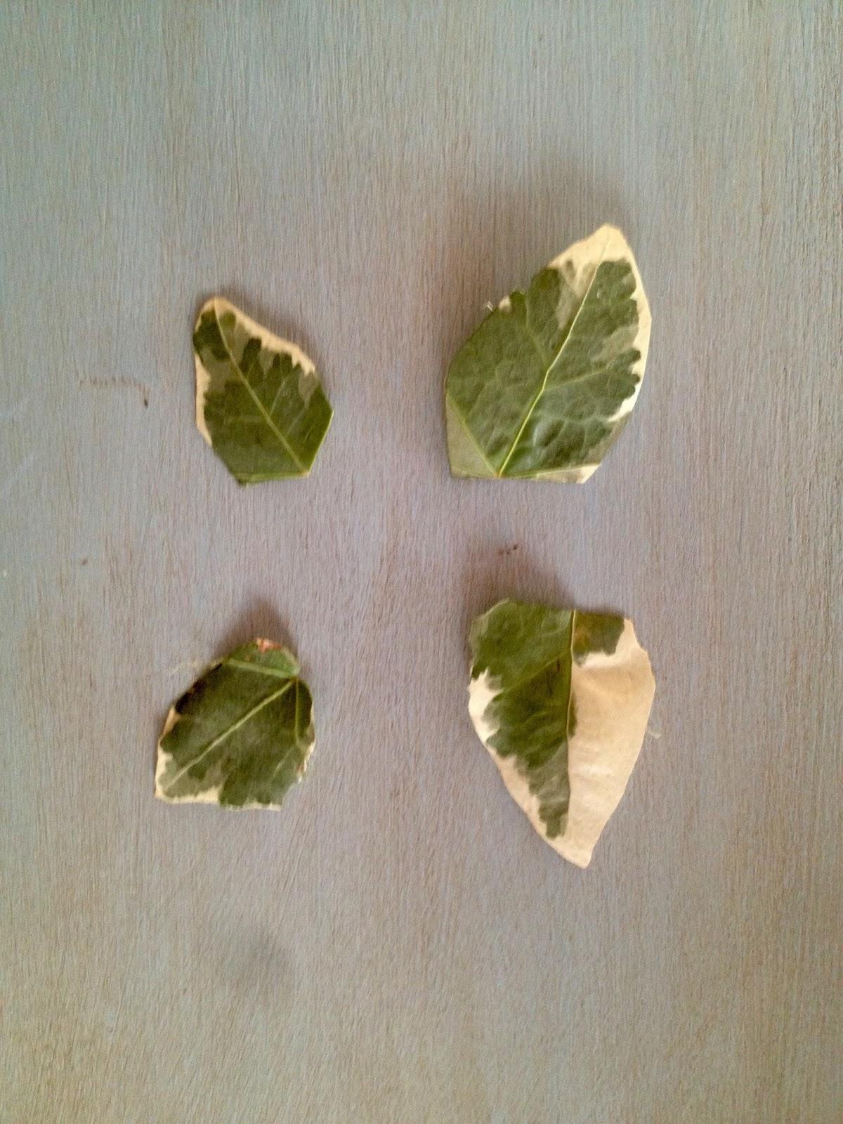 inteGrado: Mariposa Ecológica (Angélica Cerveró)