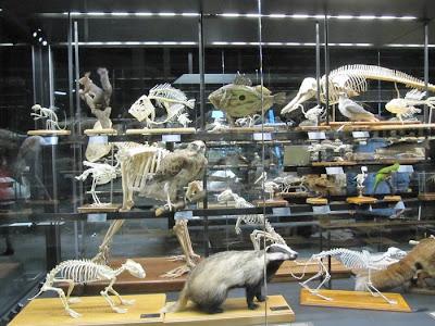 esqueletos animales, museu blau animales