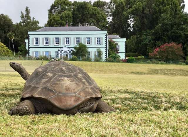 Jonathan, The Giant Tortoise, Is The World's Oldest-Known Animal
