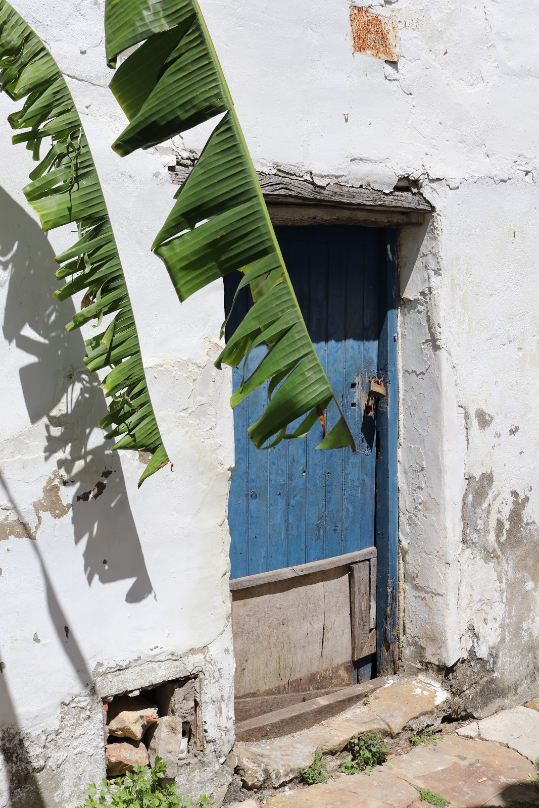 palm tree against blue door against white walls of Castillo de Castellar town