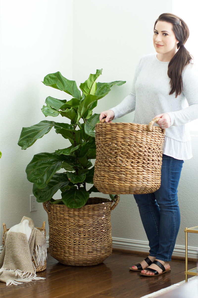 baskets for indoor trees, fiddle leaf fig tree in basket