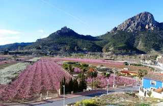 Floracion_Atalaya_Ermita_Siyasa
