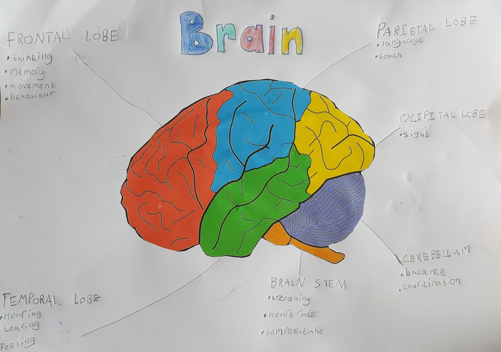 Learning About The Brain Multicultural Motherhood