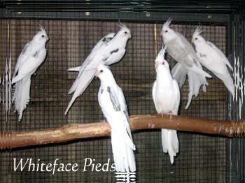 MY BIRDS PICS: Post 2,,PARROT'S PRICE IN INDIA