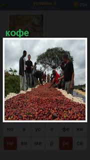 люди занимаются сушкой ингредиентов для кофе на поверхности земли