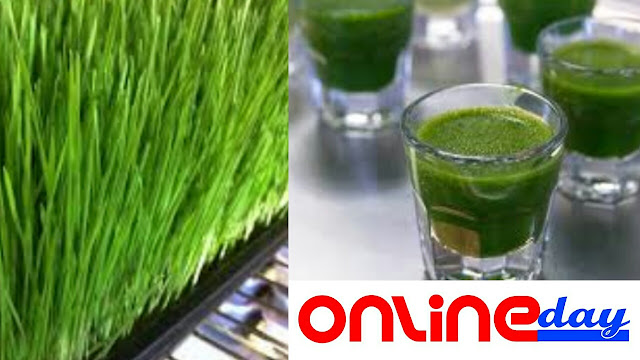 Wheat grass Benefits, Side effects, Nutrition,  How to Use , Reasons and Better way to Drink.