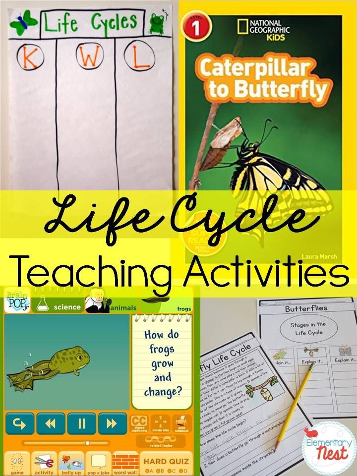 Second Grade Nest: Teaching Life Cycles