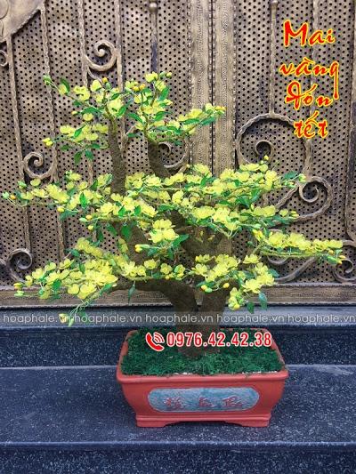 Hoa da pha le tai Dich Vong