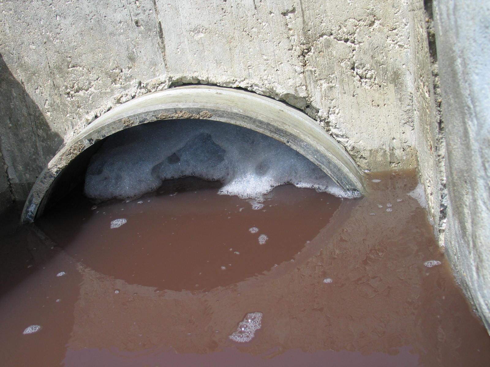 Resultado de imagem para Fotos da poluição na Ria Formosa