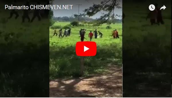 Saqueadores entran en finca en Palmarito y matan 300 animales