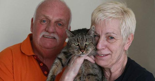 Самый старый кот отметил свой 31 день рождения