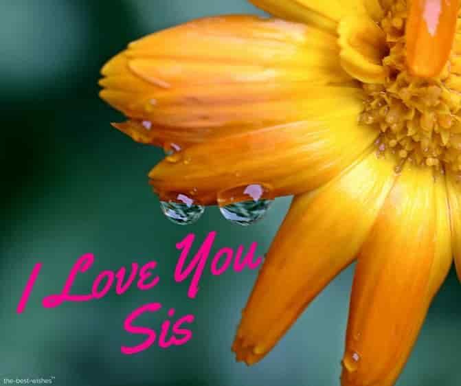 i love you sis