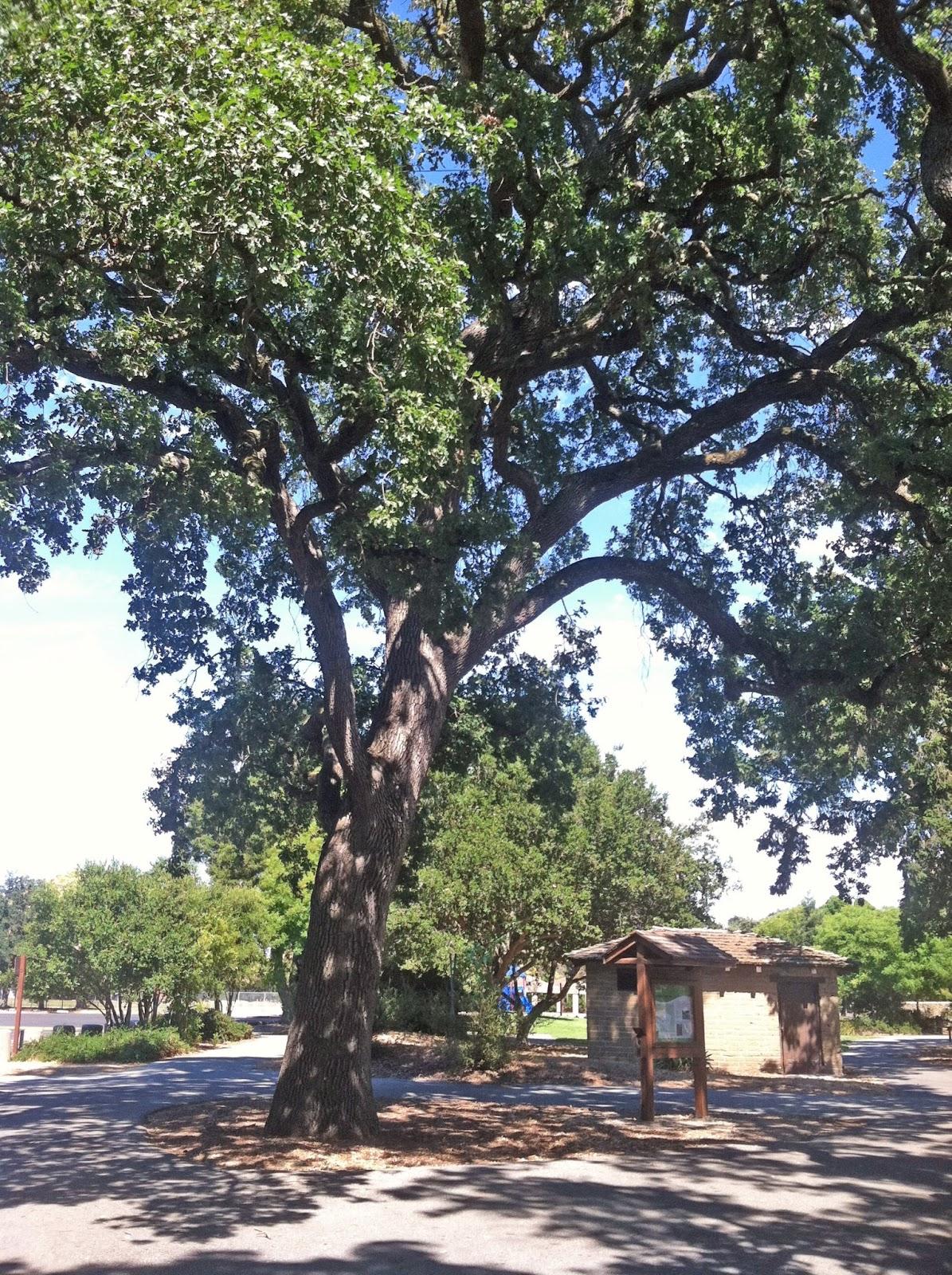 Lois Miller's Greenspeak: Living With Native Oaks