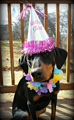 rescued doberman dalmation beagle mix dog second birthday