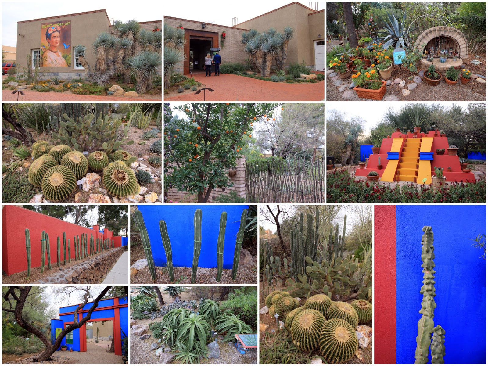 ... To Check Out Plants For The Southwest Nursery But Changed My Mind At  The Last Minute. It Was Still Overcast When I Left The Tucson Botanical  Garden So ...