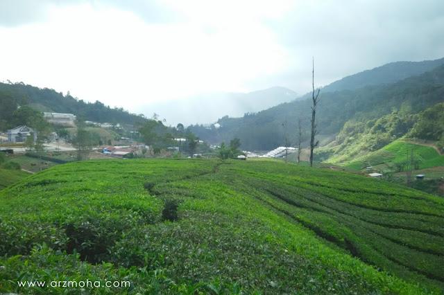 permandangan di ladang teh cameron highlands, ladang teh,