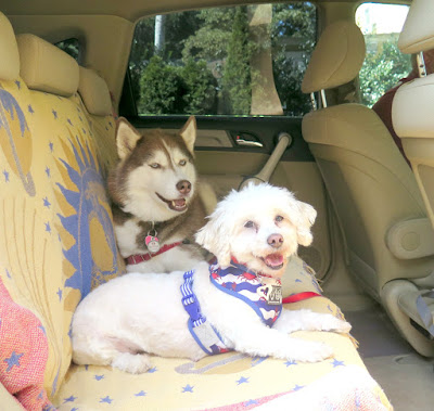 Taking the dogs on a road trip to Gardiner County Park and Beach in Long Island NY  #dogfriendly #dog