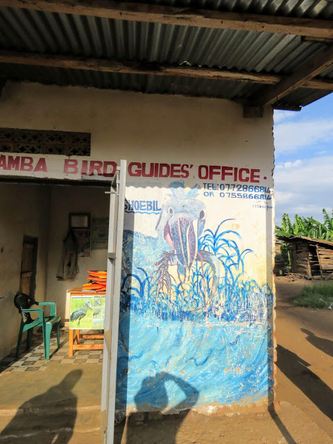 Mabamba Bird Guides Office in Uganda