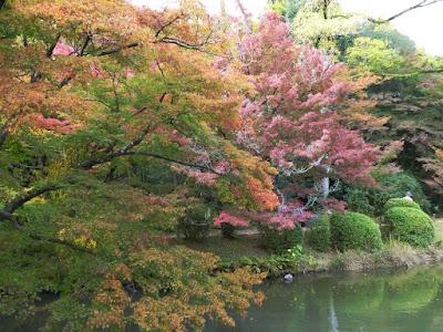 【京都府】京都府立植物園 池と紅葉