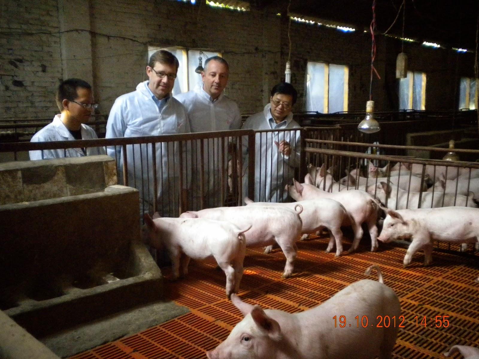 Farm Animals Working Together
