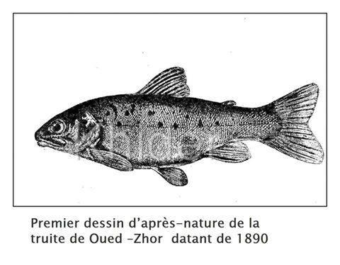 de nombreux poissons datant