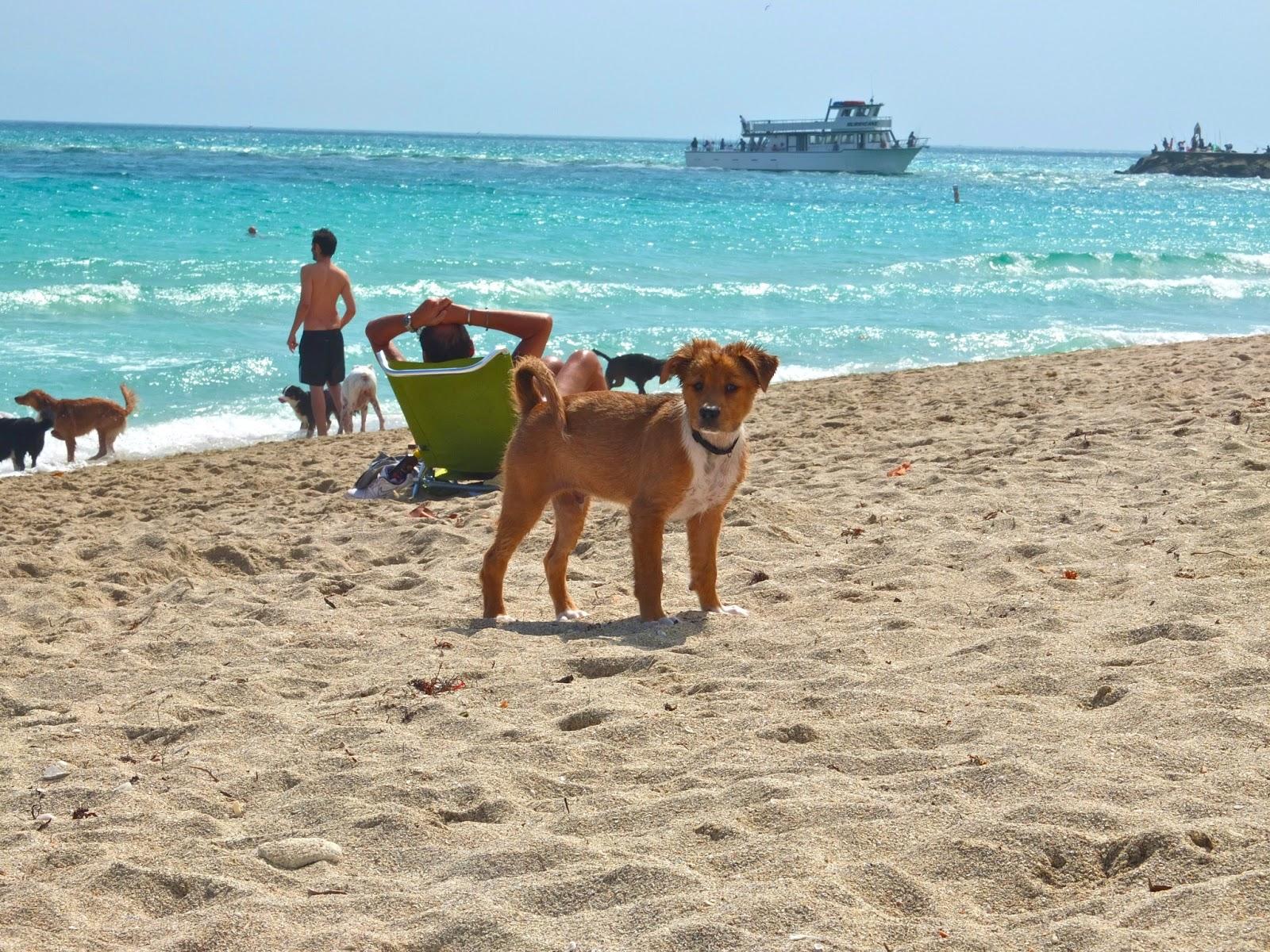 abaco nude beach jpg 1200x900