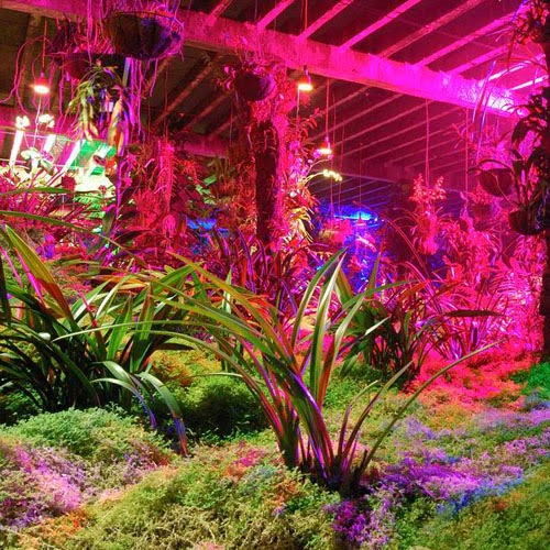 An Introduction To Led Lights Led Grow Lights Promotes Indoor Gardening And Hydroponics
