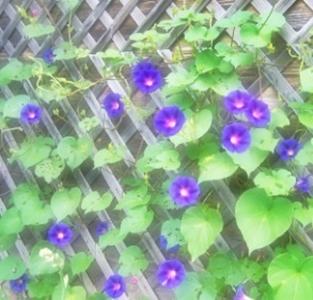Arti Mimpi Bunga  Anggrek Merambat Di Pagar
