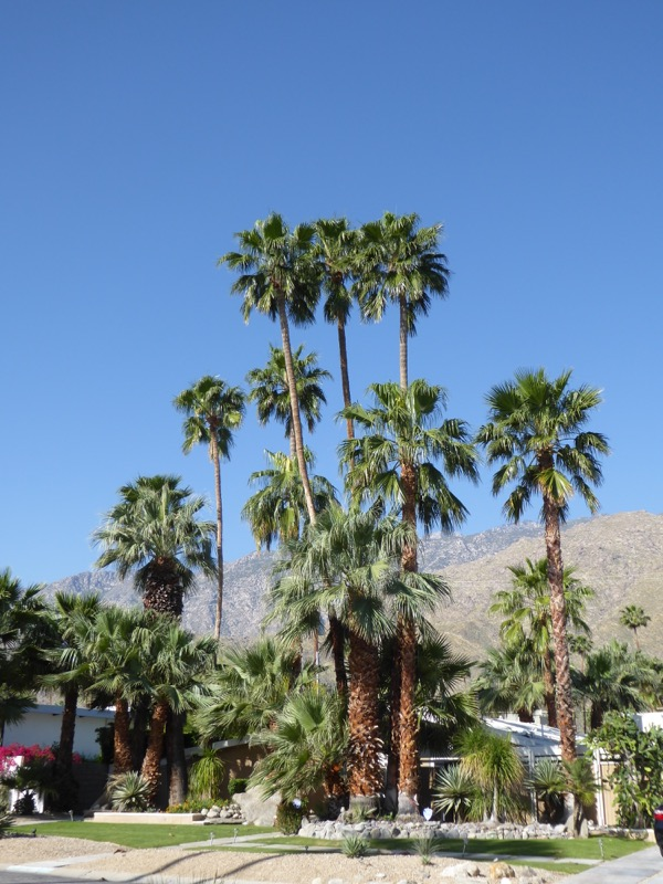 Twin Palms Midcentury neighbourhood Palm Springs