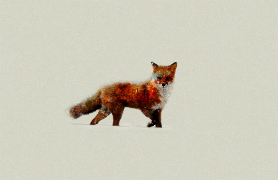 Fox Animal Minimalism Hd Wallpaper Wallpapers Sinaga