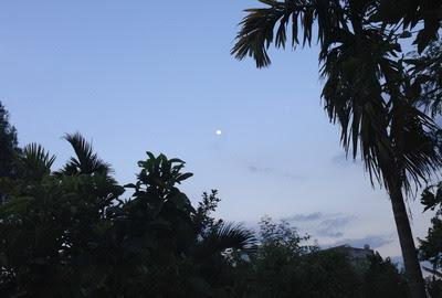 Tưới nước đêm trăng