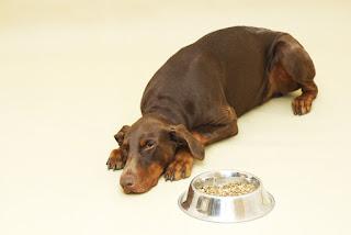 Hay muchas razones para señales de que su mascota tiene dolor , incluyendo un hueso roto, una lesión en el músculo o ligamento, un dolor de muelas, un problema gastrointestinal subyacente o incluso el cáncer.