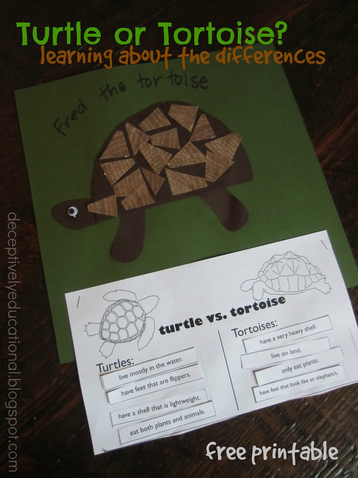 Relentlessly Fun Deceptively Educational Turtle Or