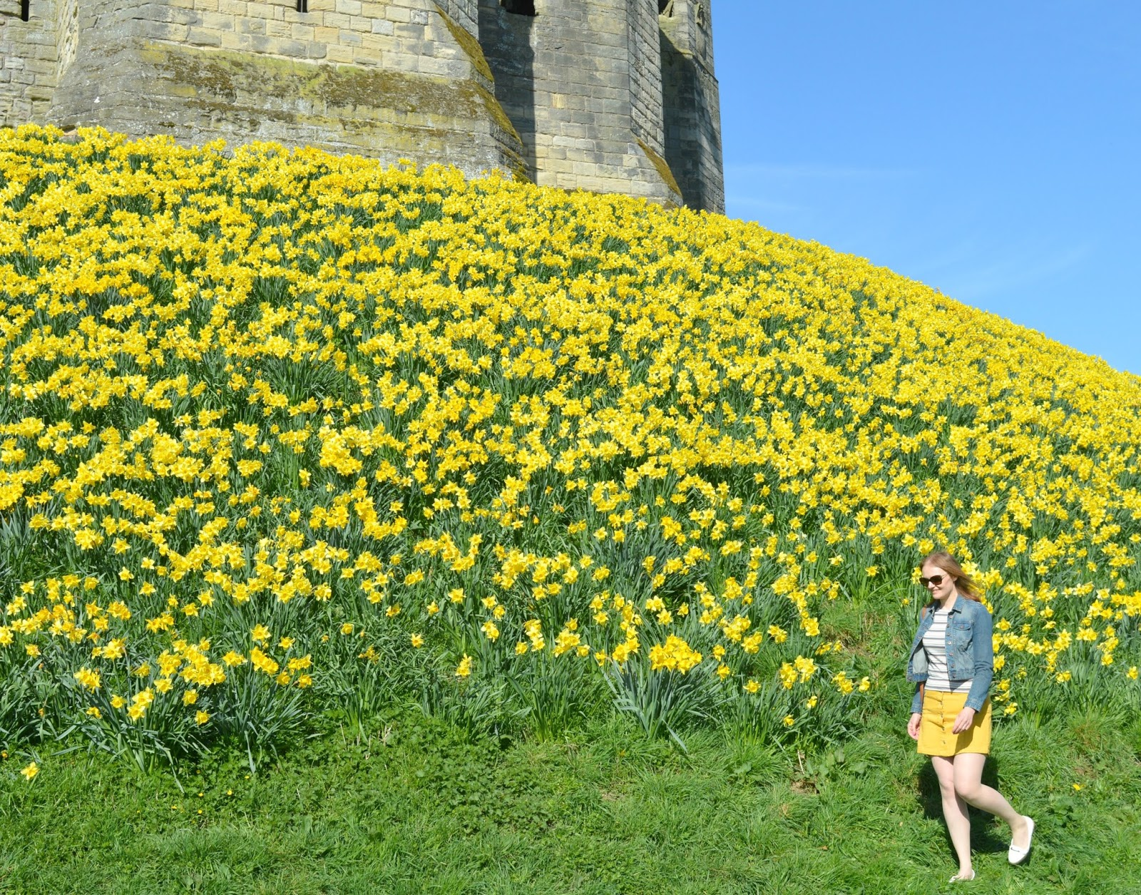 Daffodils at Castle - A Day Trip to Warkworth, Northumberland
