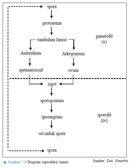 Diagram reproduksi lumut