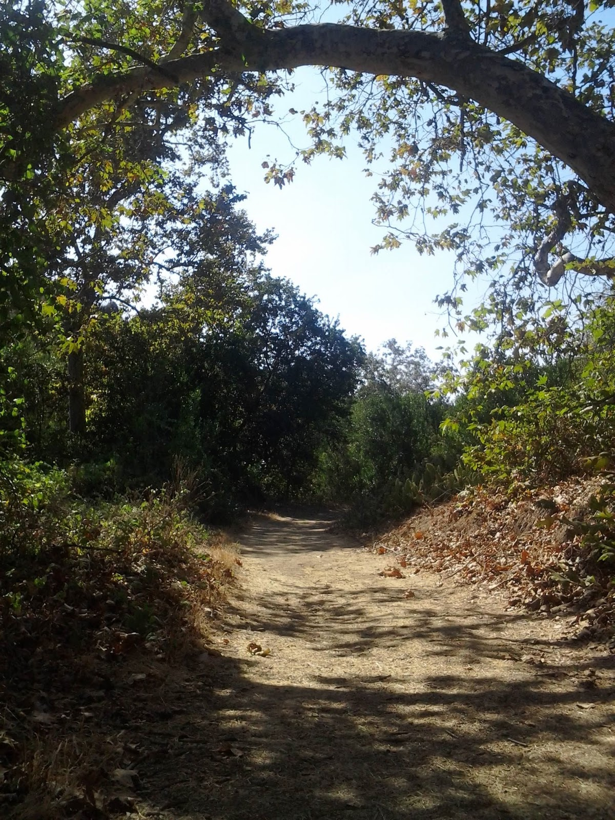 Sycamore Canyon School >> Hiking Around Turnbull Canyon Trail Whittier, CA